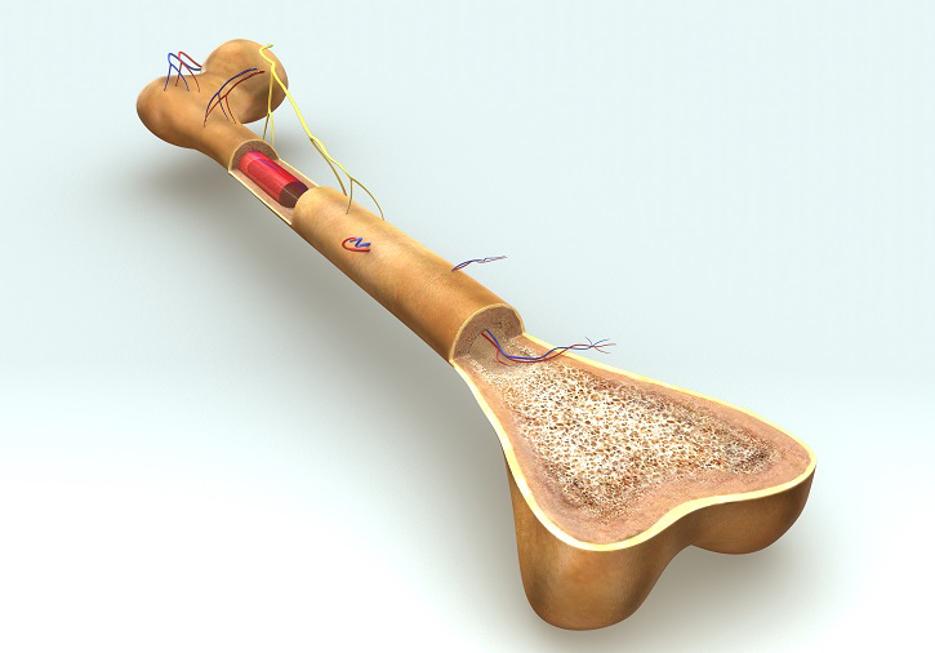 Müdigkeit und Belastungsunfähigkeit - Multiple Myelom