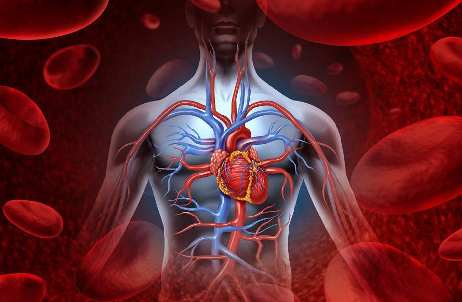 Neue Ära im Kampf gegen Herz-Kreislauf-Erkrankungen